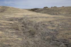 Offset stream channel in Carrizo Plain